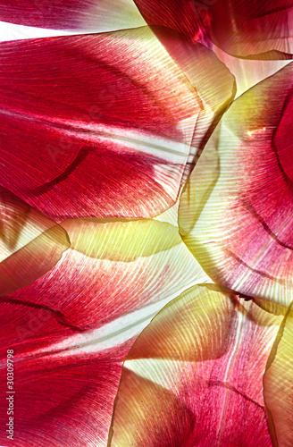 Obraz na Szkle Tulpenblätter