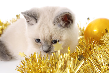 kitten with a New Year's garland.