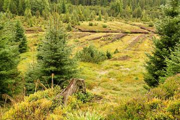 Piller Moor - Piller Swamp 19