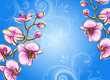 Orchid on a blue background