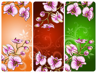Orchid on a colorfull background