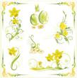 Ostern, Osterglocken, Frühling, Narzissen, vector set