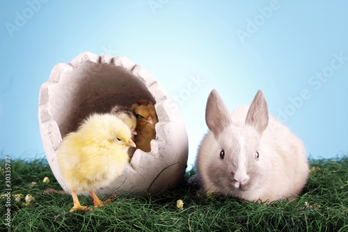 Easter rabbit and chicken!