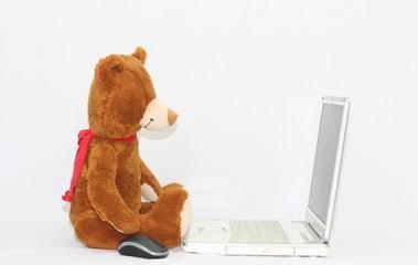 Ours et ordinateur