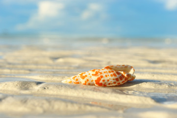 Shell on a beach
