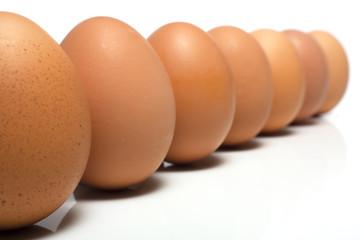 Eggs Standing Landscape