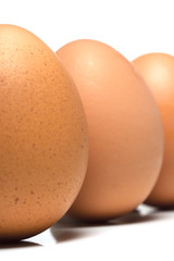 Egg Standing Portrait