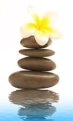 Frangipani on brown spa stones