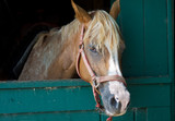 Brown Horse with White Streak, In Stable Stall