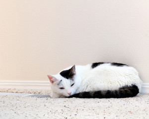 Cat Warming Floor Vent