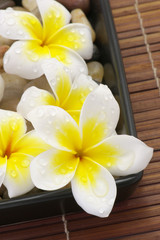 Spa flowers agains pebbles, tray and bamboo matt