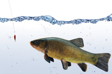 Fische 69
