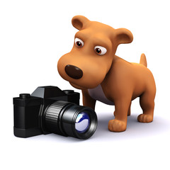 3d Puppy finds an SLR camera