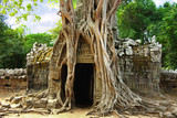 Huge roots of tropical tree  on the temple near Angkor wat