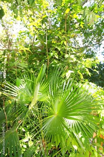 chit-palma-w-dzungli-dzungli-na-riwierze-majow