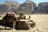 Ťavy, Wadi Rum, Jordánsko