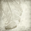 textured old paper background with dyed ostrich feather