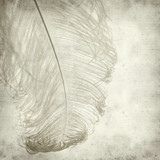 textured old paper background with dyed ostrich feather poster