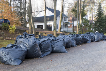 Many green garbage bags at curb