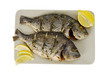 Two roasted denis fishes on plate