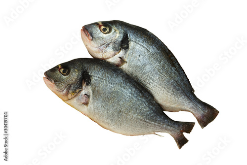 Two raw denis fishes isolated on white