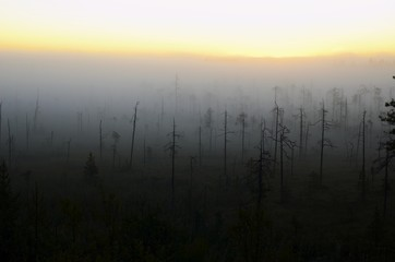 Mist over the marsh. Karelia. Sunrise.
