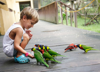 young boy feeding parrots in park