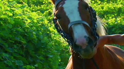 Cavallo in vigna - Slow-motion