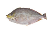 Saltwater Fish Ready For Cooking poster