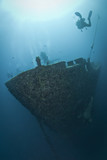Fototapete Agressivität - Silhouette - Unterwasserlandschaft