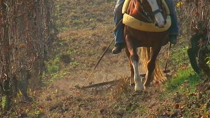 Cavallo che traina - Frontale - Slow-motion