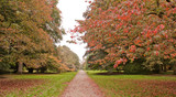 Trees in Autumn colours at Westonbirt Arboretum, UK
