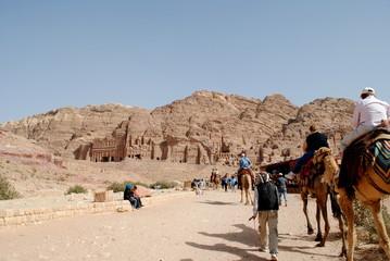 Camels in Petra, Jordan desert