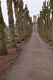 Lime tree avenue converging on a graveyard chapel