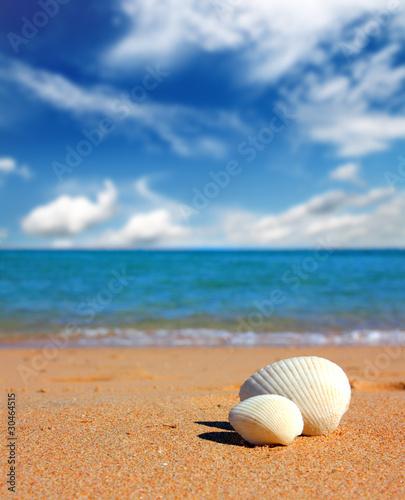 view on seashells on beach