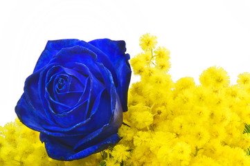 Blue Rose and Mimosa - Rosa Blu con Mimosa