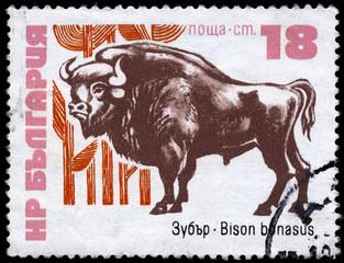 BULGARIA - CIRCA 1973 Bison