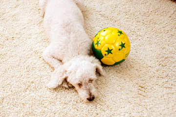 cachorro bola