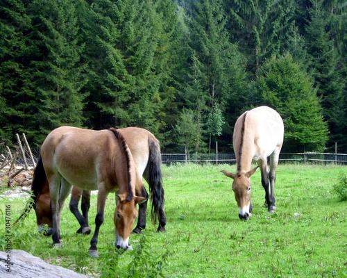 Pferde im Wildpark