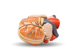 Human heart, medical visual aid poster