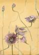 Illustration of vintage  poppy