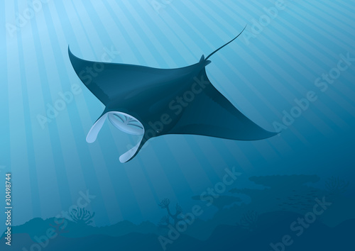 Manta Ray flying above the seabed.