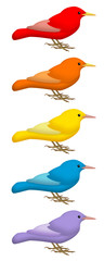 Colored Birds 1