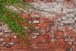 蔦がからまる煉瓦倉庫壁