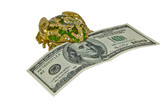 money in a frog