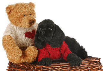 puppy with bear