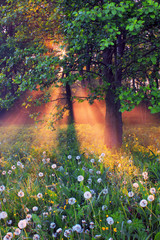 The rays of dawn sunlight illuminate the clearing with wildflowe