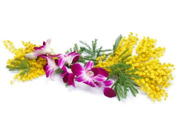 Mimosa e orchidea