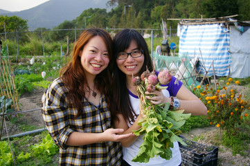 Girls harvesting beetroots happily