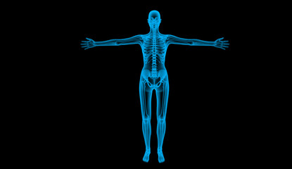 human body by X-ray, 3d render
